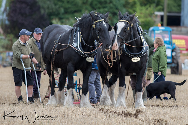 Pair of horses match ploughing