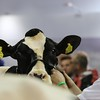 UK_Dairy_Day_2017_6N4A9290