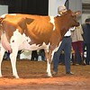 UK_Dairy_Day_2017_L32A0092