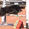Team/PVP Relay - USDAA 2017 Wild West Regional