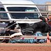 Grand Prix Finals - USDAA 2017 Wild West Regionals