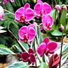 Butchart Gardens - Spring Prelude