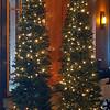 Trees in the lobby of Nita Lake Lodge