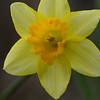 Spring in Feb