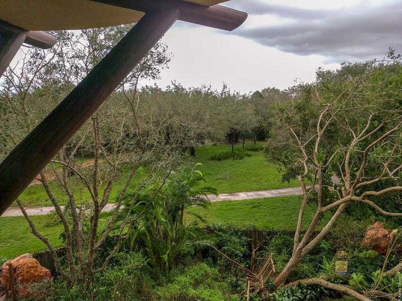 Savanna view