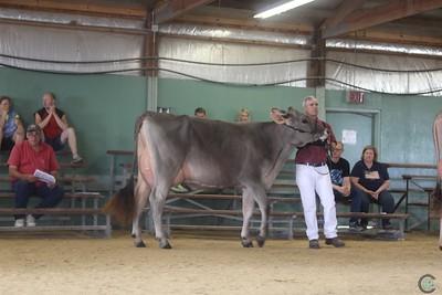 WI  Brown Swiss State Show 2017 Intermediate Cows
