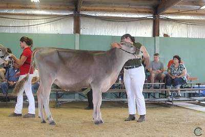 WI State Brown Swiss Show 2017