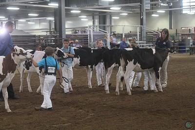 WI State Holstein Show 2017