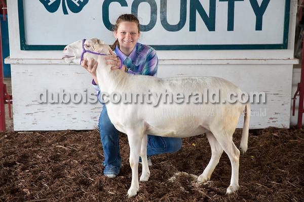 Sheep_ElizabethHohler.jpg