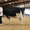 WesternSpringNtl17_Holstein_1M9A4470