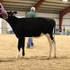 WesternSpringNtl17_Holstein_1M9A4473