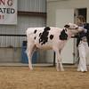 WesternSpringNtl17_Holstein_1M9A4483