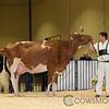 RedDeer17_Holstein_IMG_8571
