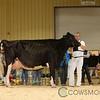 RedDeer17_Holstein_IMG_8573