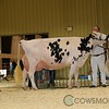 RedDeer17_Holstein_IMG_8575