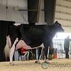 RedDeer17_Holstein_IMG_8578