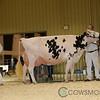 RedDeer17_Holstein_IMG_8574