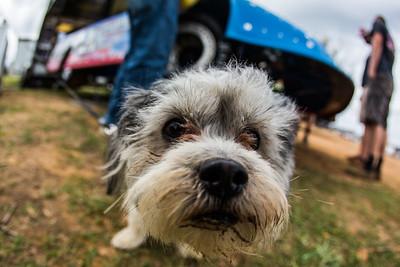 Devin Moran's dog