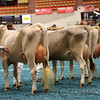 WDE17_BrownSwiss_1M9A4381