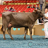 WDE17_BrownSwiss_1M9A4371