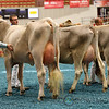 WDE17_BrownSwiss_1M9A4382