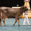 WDE17_BrownSwiss_1M9A4374