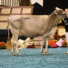 WDE17_BrownSwiss_1M9A4366