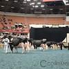 WDE17_HolsteinChp-7160
