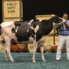 WDE17_Holstein-0750