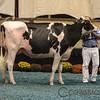 WDE17_Holstein-0754