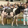 WDE17_Holstein-0745
