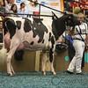 WDE17_Holstein-0757