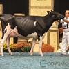 WDE17_Holstein-0744