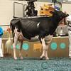 WDE17_Holstein-0748