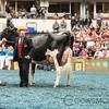 WDE17_Holstein-9408