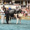 WDE17_Holstein-9404
