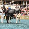 WDE17_Holstein-9405