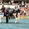 WDE17_Holstein-9407