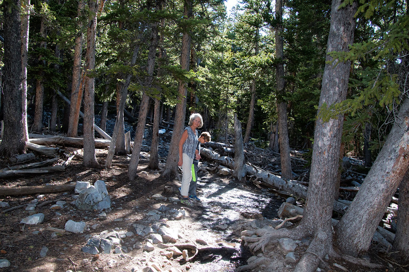Alpine Lakes Loop Trail, Great Basin National Park, Nevada