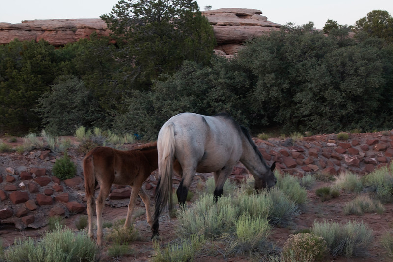South Rim, Canyon de Chelly National Monument, Arizona