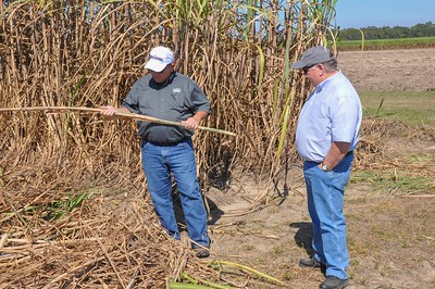 American Farm Bureau President Zippy Duvall examines the sugarcane stalk himself. Pictured with President Duvall is Louisiana Farm Bureau 1st Vice President and Rapides Parish sugarcane farmer Jim Harper.