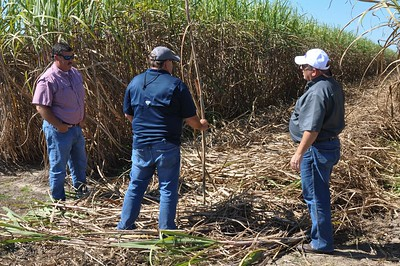 Louisiana Farm Bureau Secretary/Treasurer and St. Martin sugarcane farmer Mike Melancon, middle, explains the process of sugarcane harvest to American Farm Bureau President Zippy Duvall, far right. Louisiana Farm Bureau 3rd Vice President Richard Fontenot, far left, assists Melancon.