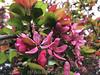 Blühender Baum © Patrick Lüthy/IMAGOpress.com