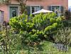 Vorgarten bei einem Haus an der Aarestrasse in Aarau © Patrick Lüthy/IMAGOpress.com