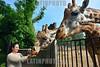 Guatemala : Una visitanta alimenta jirafas en el Zoológico de Guatemala / A visitor feeds giraffes at the Guatemala Zoo / Guatemala : Eine Besucherin füttert Giraffen im Zoo von Guatemala Stadt © Jesús Alfonso/LATINPHOTO.org