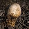 Roadside Mushroom