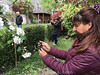 Personen fotografieren mit ihren Smartphones Blüten eines Apfelbaums © Patrick Lüthy/IMAGOpress.com