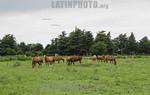 Argentina : gral arenales ruta 50 tramo 2 , agricultura , caballos / Argentinien : Pferde - Landwirtschaft � Fernando Calzada/LATINPHOTO.org