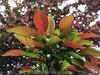 Blätter © Patrick Lüthy/IMAGOpress.com