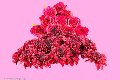 Red Chrysanthemums & Pink Roses